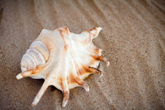 Sea shell with sand as background Royalty Free Stock Photos