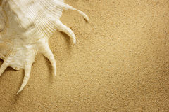 Sea shell with sand as background. Stock Images