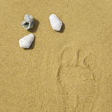 Sea shell and on sand background Royalty Free Stock Images