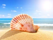 Sea shell in sand. On beach Stock Photos