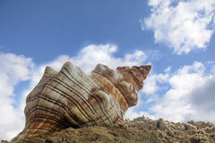 Sea shell in the sand on the beach against the blue sky with cl Stock Photo