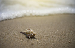 Sea shell on a sand beach with blurred sea background.selective focus.light effect added.  royalty free stock photos