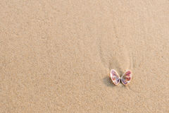 Sea shell on sand beach with copy space. Top view. Sea shell (look like butterfly) on sand beach with copy space. Top view Royalty Free Stock Images