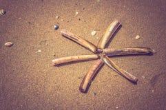 Sea shell on the sand beach Stock Photos