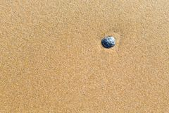 Sea shell on the sand of a beach Stock Images