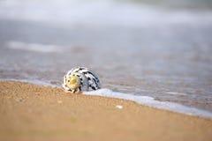 Sea shell on sand stock image