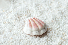 Sea shell on the sand Stock Photography