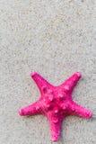 Sea shell sand board beach Stock Photo