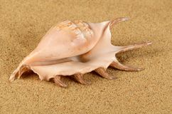 The sea shell in the sand Stock Photography