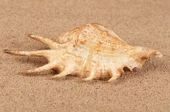 The sea shell in the sand Stock Images
