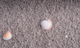 Sea shell on sand Stock Images