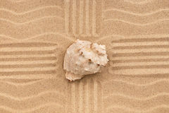 Sea shell in the sand with four lines. Stock Photography