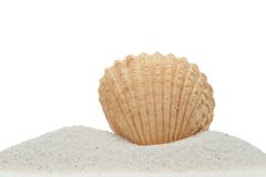 Sea shell on sand isolated on white. Sea shell on sand isolated on a white background stock photo