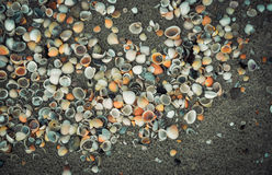 Sea shell on sand Stock Image