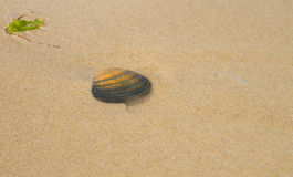 Sea Shell in sand Royalty Free Stock Images