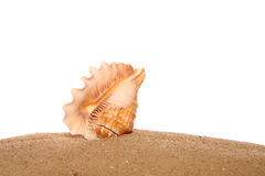 Sea shell on sand Stock Photography