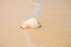 Sea shell on sand. Summer beach background Royalty Free Stock Photos