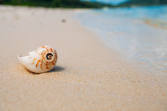 Sea shell on sand. Summer beach background Stock Image