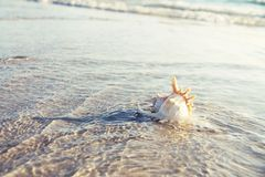 Sea shell, sand and waves. Stock Photo