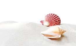 Sea shell with sand on white background Royalty Free Stock Photo