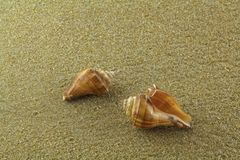 Sea shell on the sand. Sea shell on yellow sand at the beach Royalty Free Stock Photo