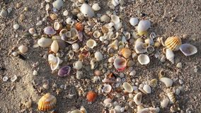 Sea shell on sandy beach. stock video footage