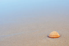 Sea shell on the sandy beach Royalty Free Stock Image
