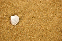 Sea shell on sandy beach Royalty Free Stock Photo