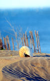 Sea shell. In the sandy beach Royalty Free Stock Images