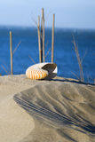 Sea shell. In the sandy beach Royalty Free Stock Photo