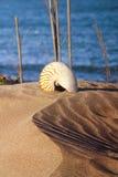 Sea shell. In the sandy beach Stock Photo