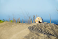 Sea shell. In the sandy beach Royalty Free Stock Photos