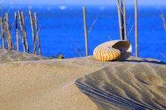Sea shell. In the sandy beach Royalty Free Stock Photography