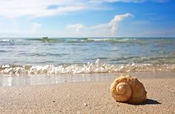 Sea shell on the sandy beach Stock Photo