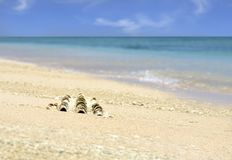 Sea shell on sandy beach with blue sky Stock Photography