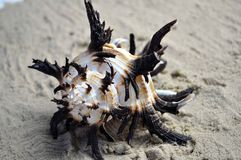Sea shell on a sandy beach Stock Photos