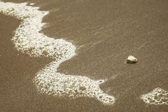 Sea Shell on the sandy beach with the leading line Stock Photography