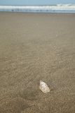 Sea Shell on sandy beach with Sea in Background Royalty Free Stock Photography