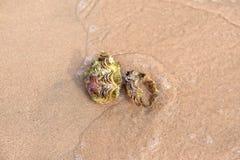Sea shell on the sandy beach. Seashell nautilus on sea beach under sunset sun light Stock Photography