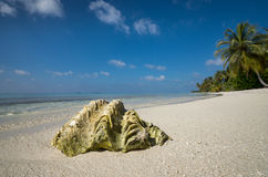 Sea shell on the sandy beach. On tropical island Royalty Free Stock Images