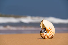 Sea shell on the sandy beach on tropical island Stock Images