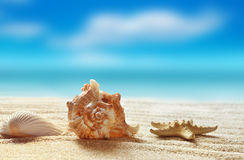 Sea shell on the sandy beach Royalty Free Stock Images