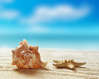 Sea shell on the sandy beach Stock Images