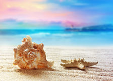 Sea shell on the sandy beach Royalty Free Stock Photos