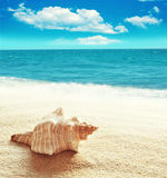 Sea shell on the sandy beach Royalty Free Stock Photo