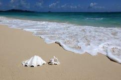 Sea Shell Sandy Beach Wave Hawaii. Royalty Free Stock Image