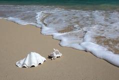 Sea Shell Sandy Beach Wave Hawaii. Royalty Free Stock Photography