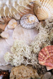 Sea shell scene Royalty Free Stock Images