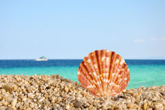 The sea shell and the sea Royalty Free Stock Images