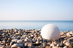 Sea shell with sea and blue sky Stock Photography